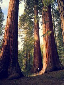 Zanimivosti-Skrivnost-visokih-dreves-1