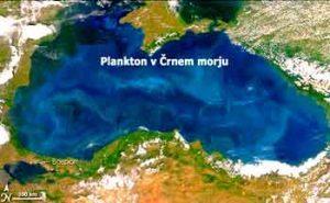 Zanimivosti-plankton-crno-morje