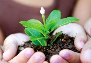 hands flower2