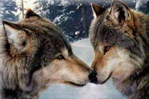 wolves2