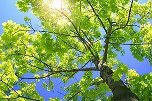 simbol drevesa
