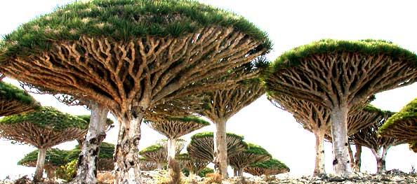 Socotra2