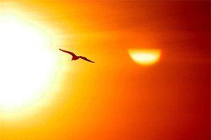 bird-hot-sun