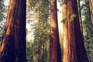 dreves